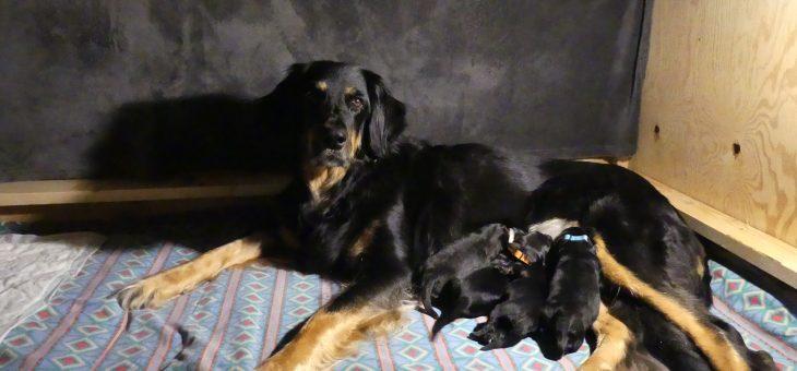Narodili sa nám šteniatka vrhu F !